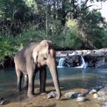 Vu d'un éléphant de Mondulkiri Project dans une cascade