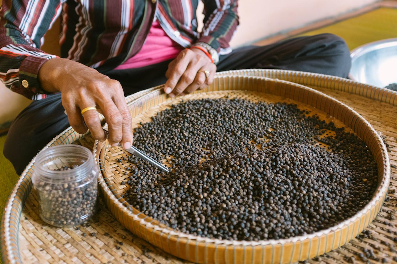 Le poivre est trié manuellement après la récolte.